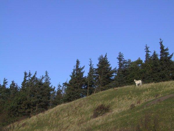 03-Ballebjerg - Hest
