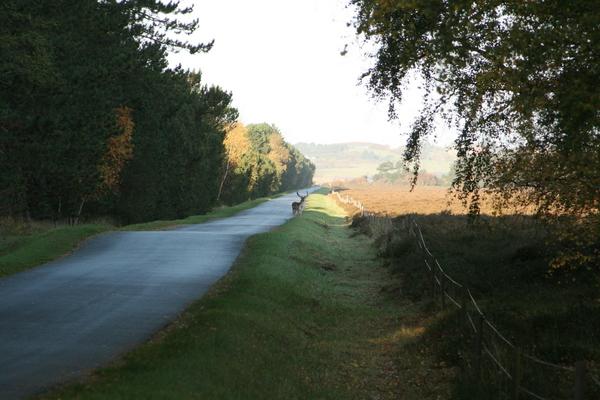 1-Mogens Wedel-Heinen - 1 Dåhjort på vejen mellem hede og skov 2
