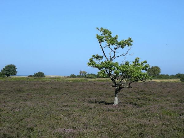 1-Susanne Sørensen - 3 Det ensomme træ midt på heden