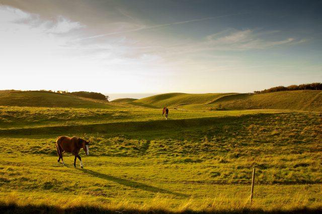 Heste i Nordby Bakker på Samsø