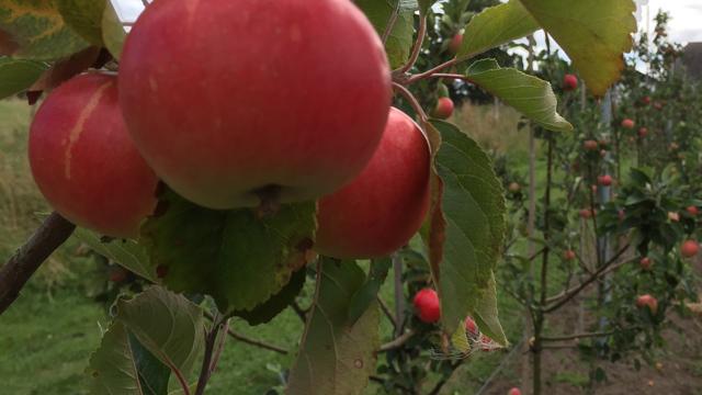 Appleman3