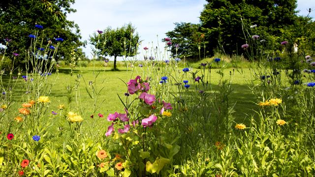 Billede af have med blomster
