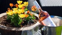 En flaske rosévin på terrassen