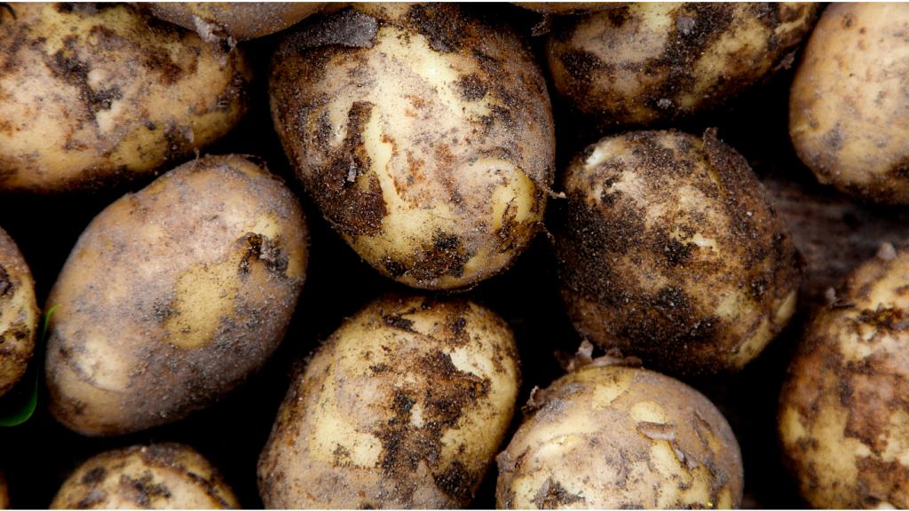 kartoffler