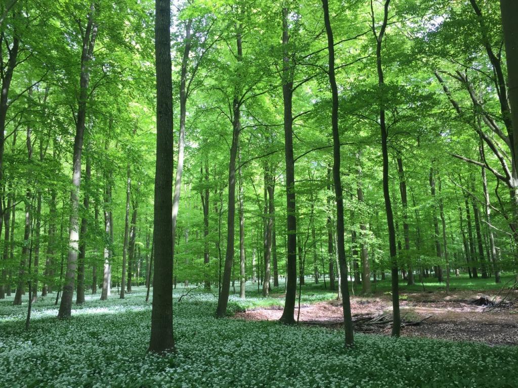 Brattingsborg skoven i maj